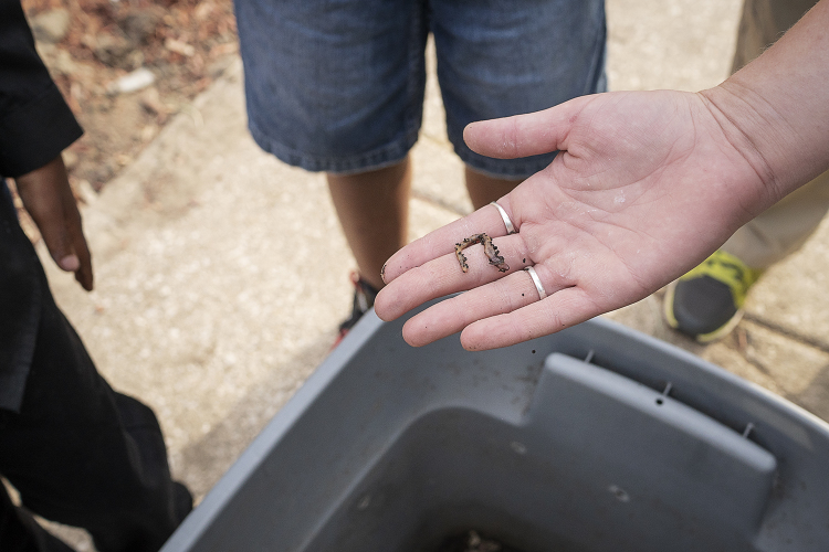 FoodCorps service member Sarah Schroeder holds a worm above a small compost bin..