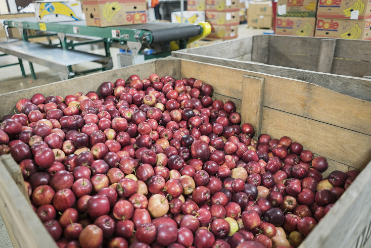 A large crate of apples waits to be sorted in the warehouse of the Food Bank of Eastern Michigan.