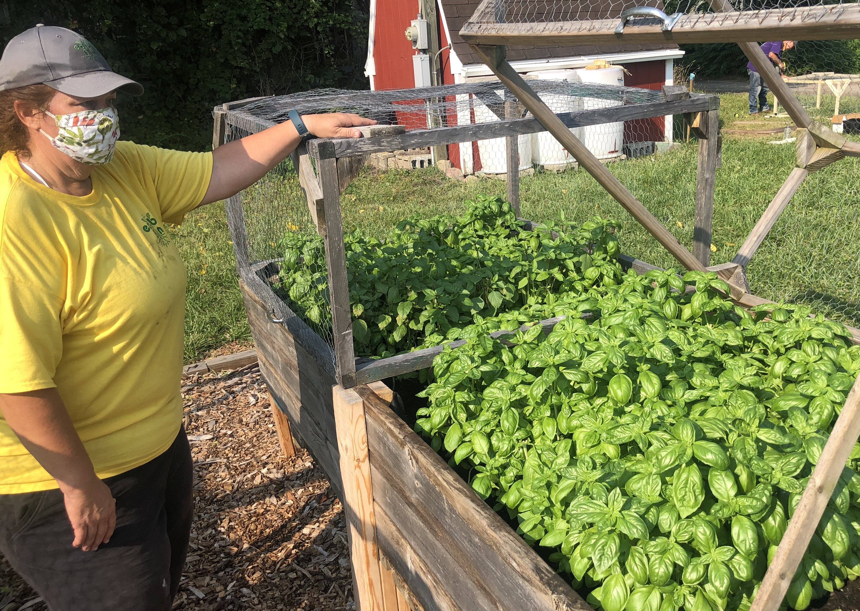 Ginny Farah shows off some of the crops in raised beds at Edible Flint's Educational Farm.