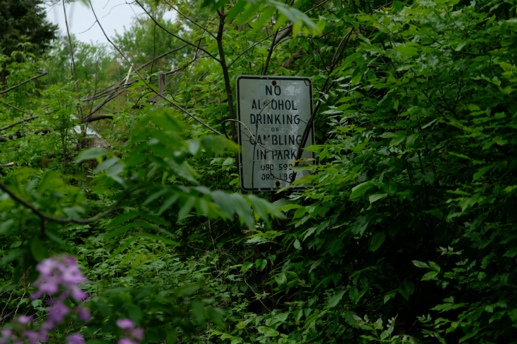 Overgrowth is commonplace throughout Dougherty Park, the hidden park within the Civic park neighborhood.